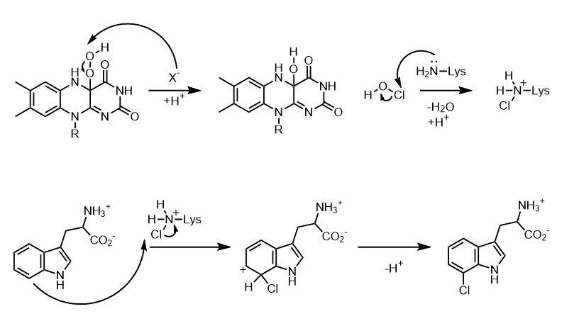 Chloramine diagram